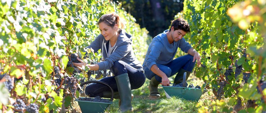 Casual Employment Ruling – Impact on Farming Community